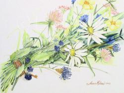 Drawn wildflower colored pencil