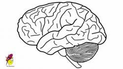 Drawn brains
