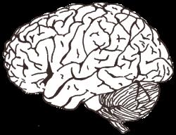 Drawn brains cognitive psychology