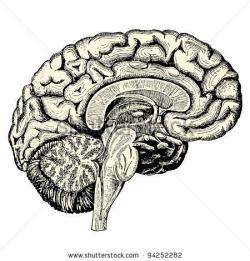 Drawn brains scientific