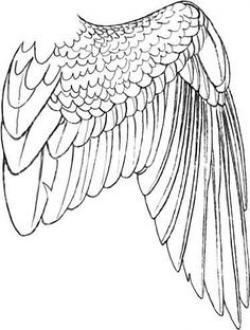 Drawn swan