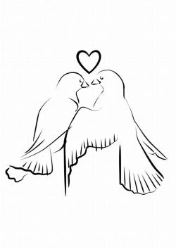 Drawn lovebird dove