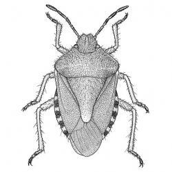 Drawn mosquito artistic