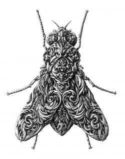 Drawn insect