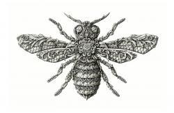 Drawn bugs