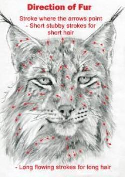 Drawn lynx hair