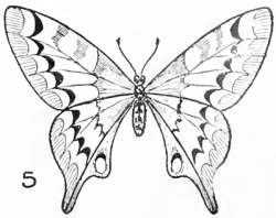 Drawn butterfly