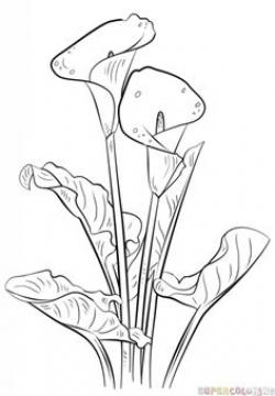 Drawn carnation