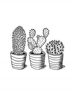 Drawn cactus aesthetic