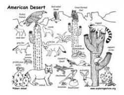 Drawn desert desert ecosystem
