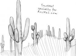 Drawn desert mexican cactus