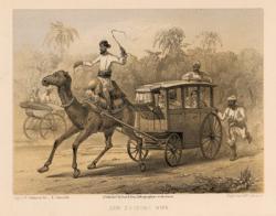 Drawn cart camel