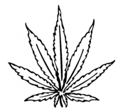 Drawn cannabis