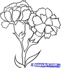 Drawn carnation
