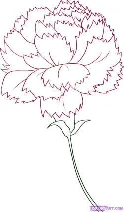 Carnation clipart outline