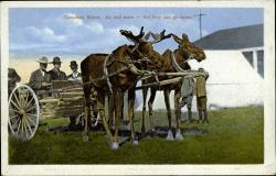 Drawn cart moose