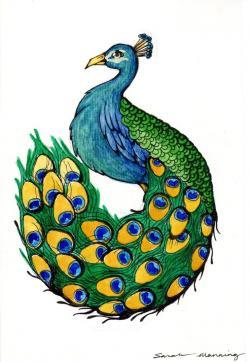 Drawn peafowl easy