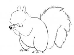 Drawn squirrel easy