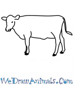 Drawn ox drawing