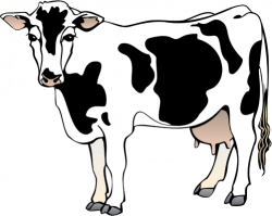 Drawn cow mammal