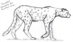 Drawn lynx cheetah