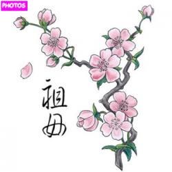 Drawn cherry blossom