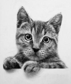 Drawn feline realistic