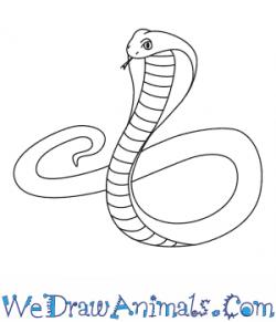 Drawn cobra