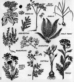 Drawn herbs black and white