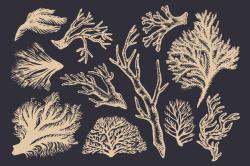 Drawn seaweed vintage