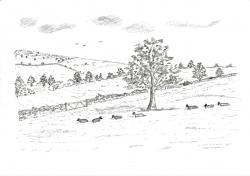 Drawn countyside pasture