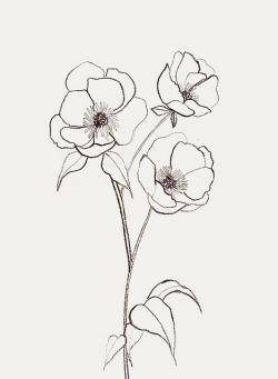 Drawn poppy easy