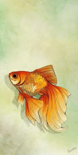 Drawn gold fish fantail goldfish