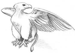 Drawn griffon imaginary creature