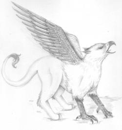Drawn griffon mythical creature