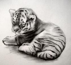 Drawn tiiger tiger cub