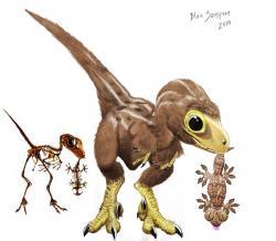 Drawn velociraptor baby