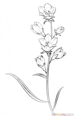 Drawn tulip contour drawing