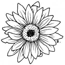 Gerbera clipart sunflower