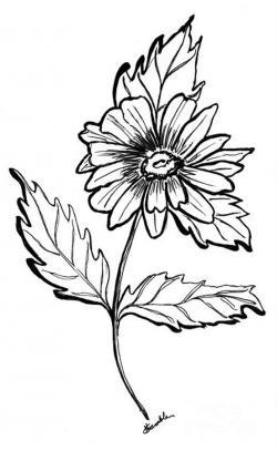 Drawn daisy gerbera daisy