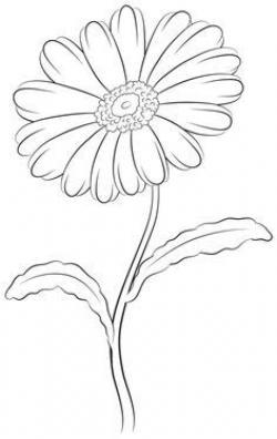 Drawn elower daisy