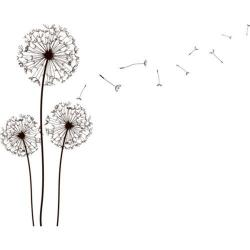 Drawn dandelion