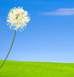 Dandelion clipart animated