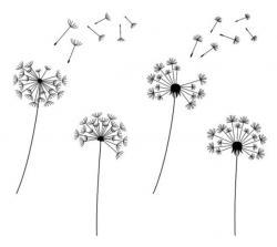 Dandelion clipart simple