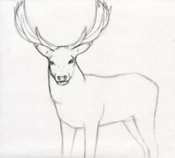 Drawn stag step by step