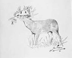 Drawn deer eating