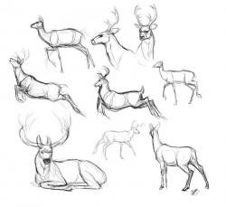 Drawn moose mammal