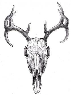 Drawn stag antelope head