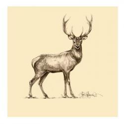 Drawn stag female deer