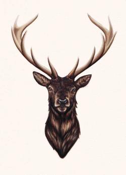 Drawn stag deer head